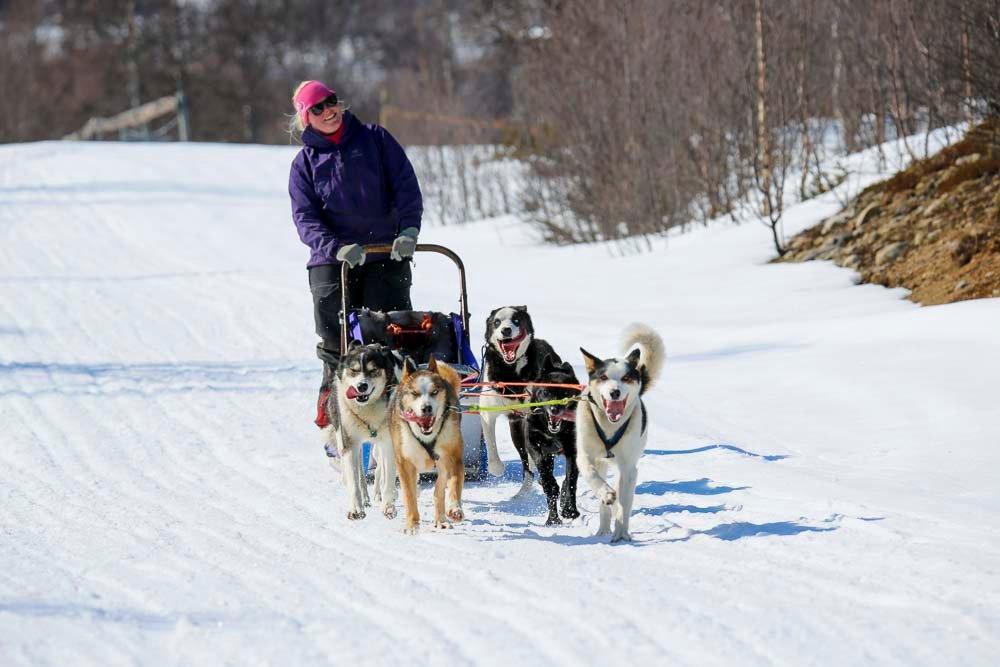 Mit Hundeschlitten rund um Geilo in Norwegen