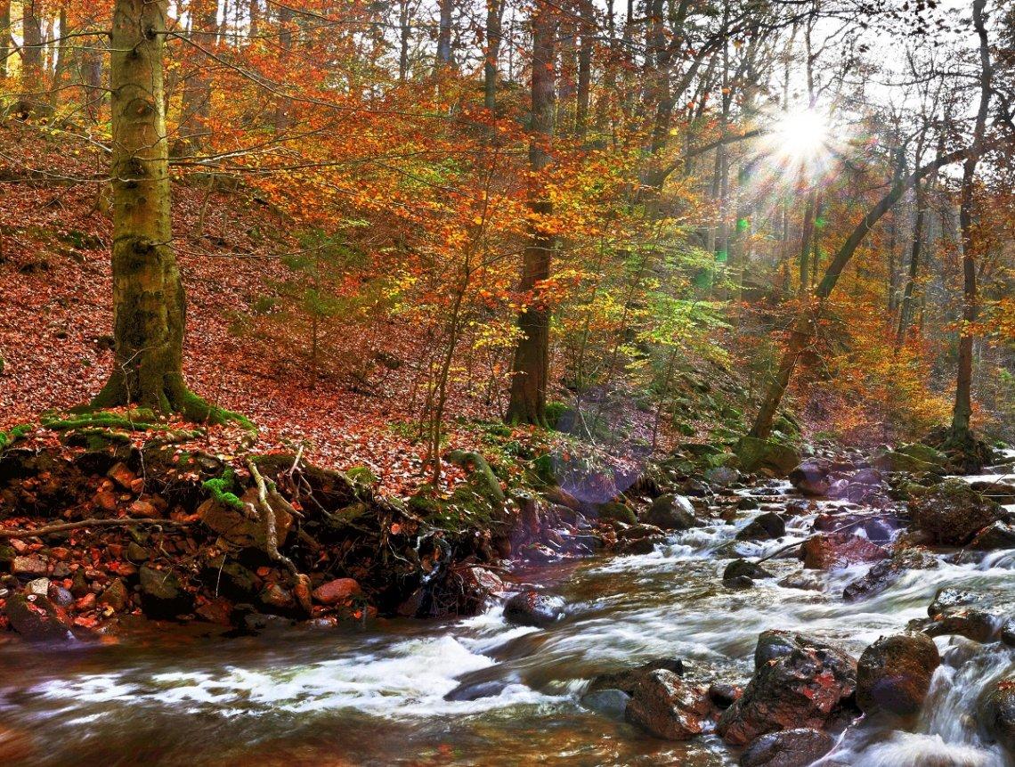Ilsetal in het Harzgebergte met herfstbladeren