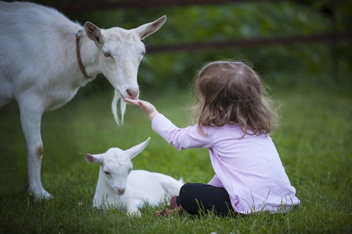 Kind füttern Ziegen auf dem Bauernhof
