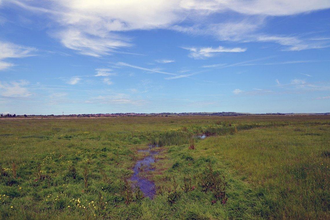 Marschlandschaft auf der Isle of Sheppey