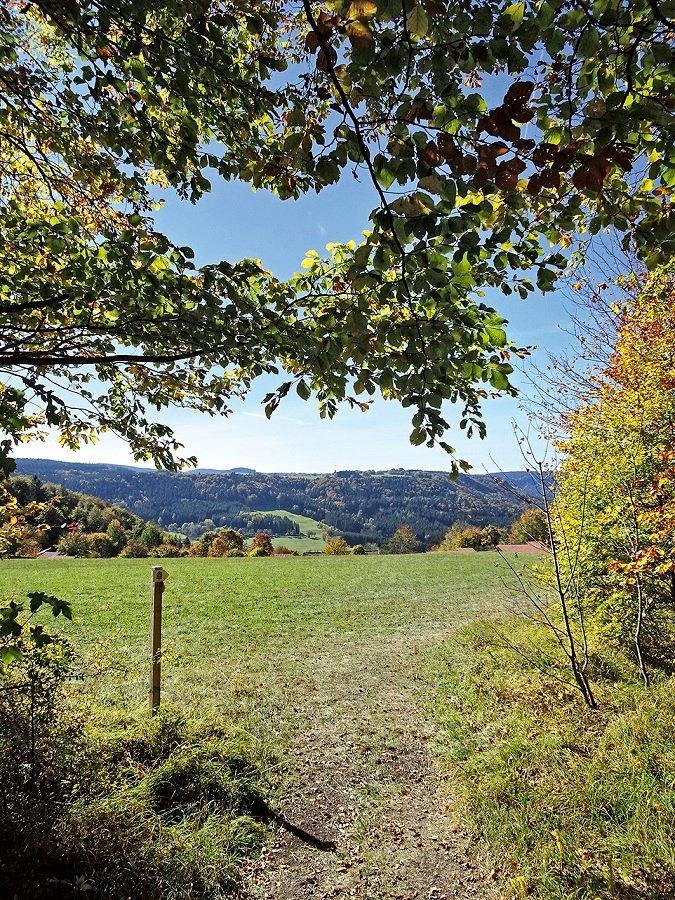 Blick aus dem Wald über die Wiesen beim Feriendorf