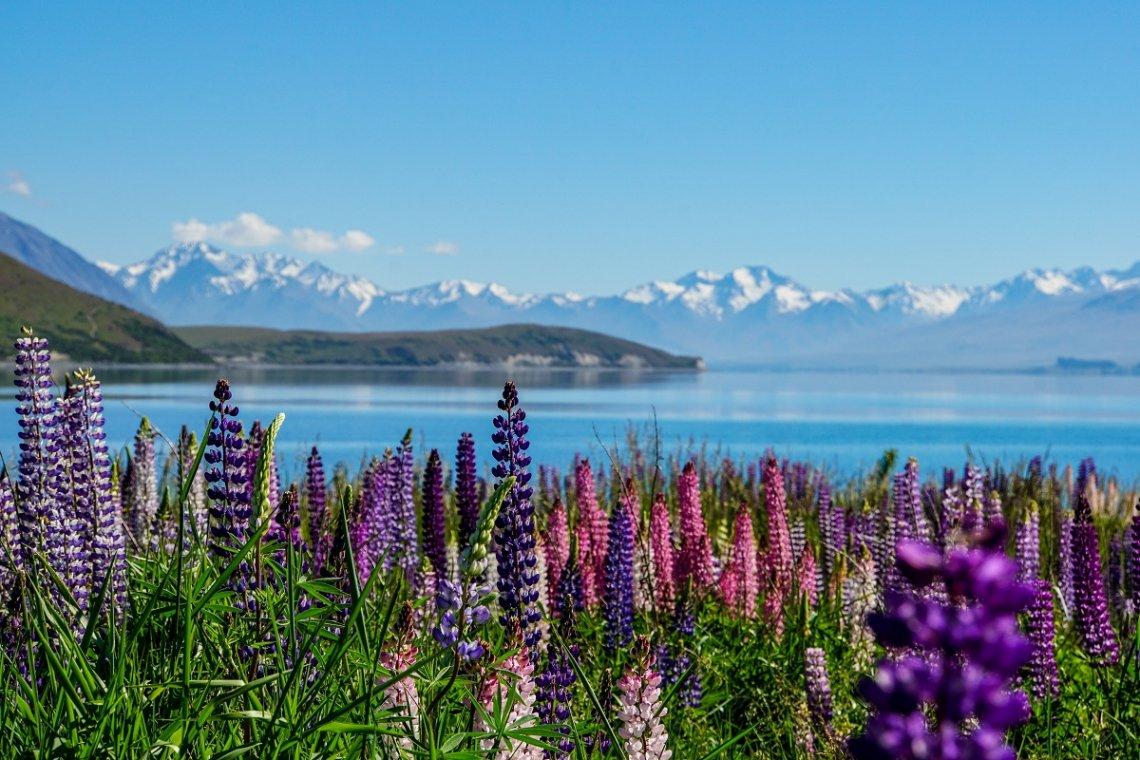 Lake Tekapu umgeben von Bergen