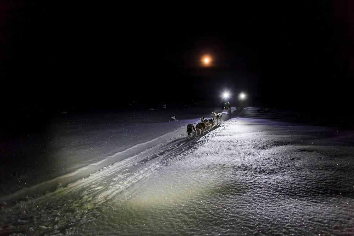 Hundeschlittentour durch die Polarnacht bei Gällivare