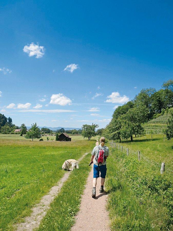 Wandern auf dem Glottertäler Winzerpfad im Sommer
