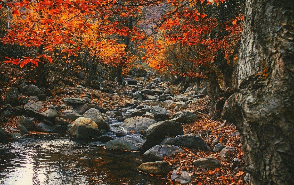Kleurrijke herfstbladeren in de Karpaten