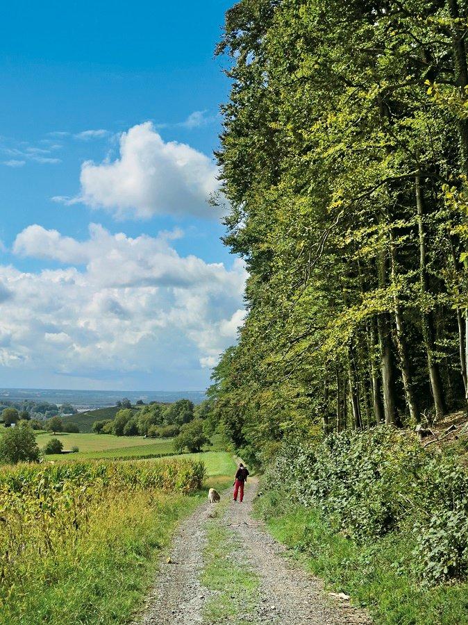 Blick auf Wanderweg zwischen Feldern und Waldrand beim Ritzenberg