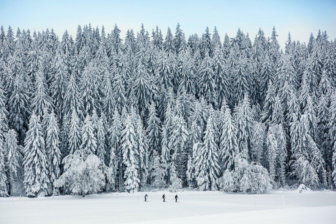 Verschneiter Tannenwald im Naturpark Doubs