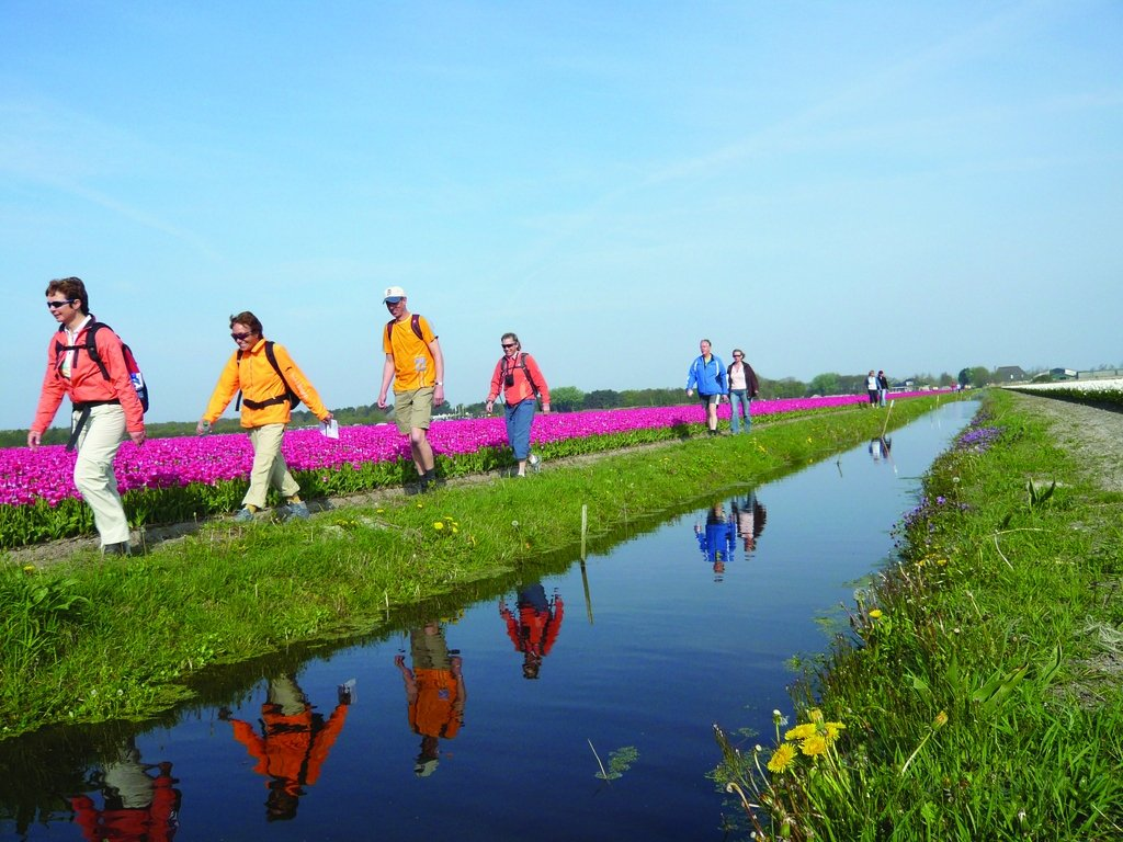 hikers along the tulip fields in the Netherlands