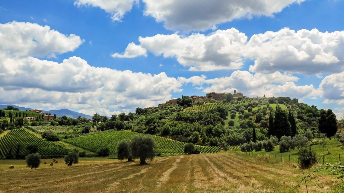 Tuscany landscape with vinyards and olive trees
