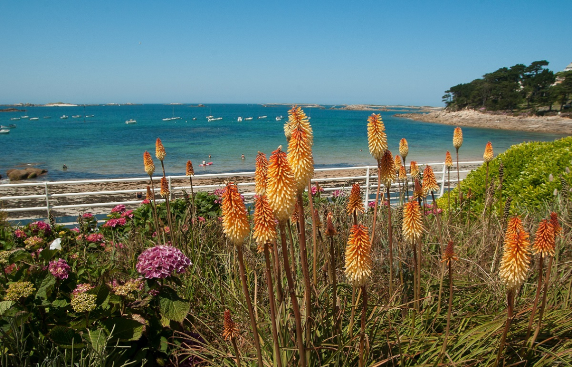The sea and plants in Brittany, France
