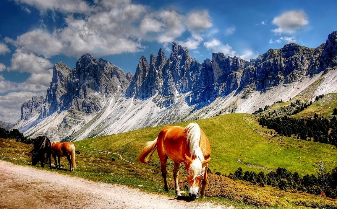 Horses in the Dolomites in Southern Tyrol