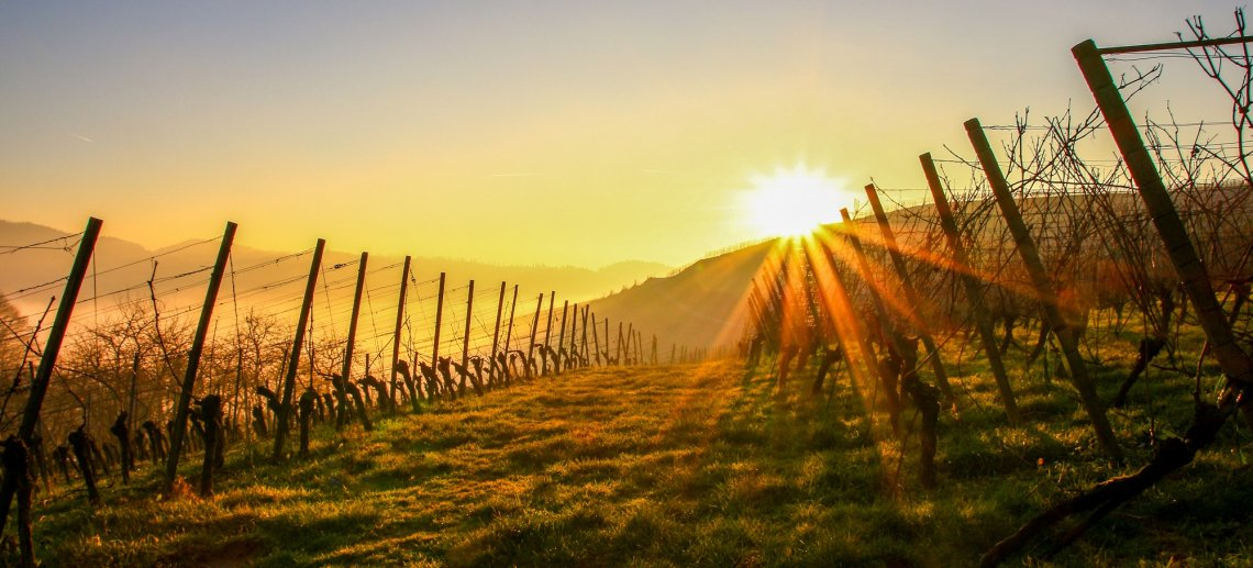 Sonnenuntergang über den Weinlagen rund um Kappelrodeck