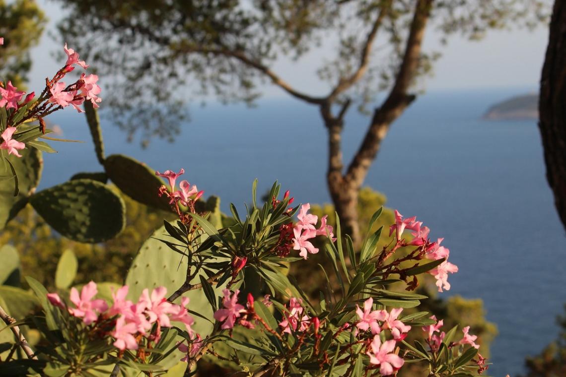 Blumen auf Ibiza
