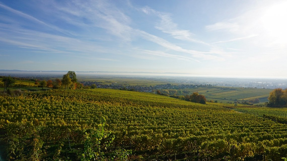 View of Kallstadt and vineyards in autumn