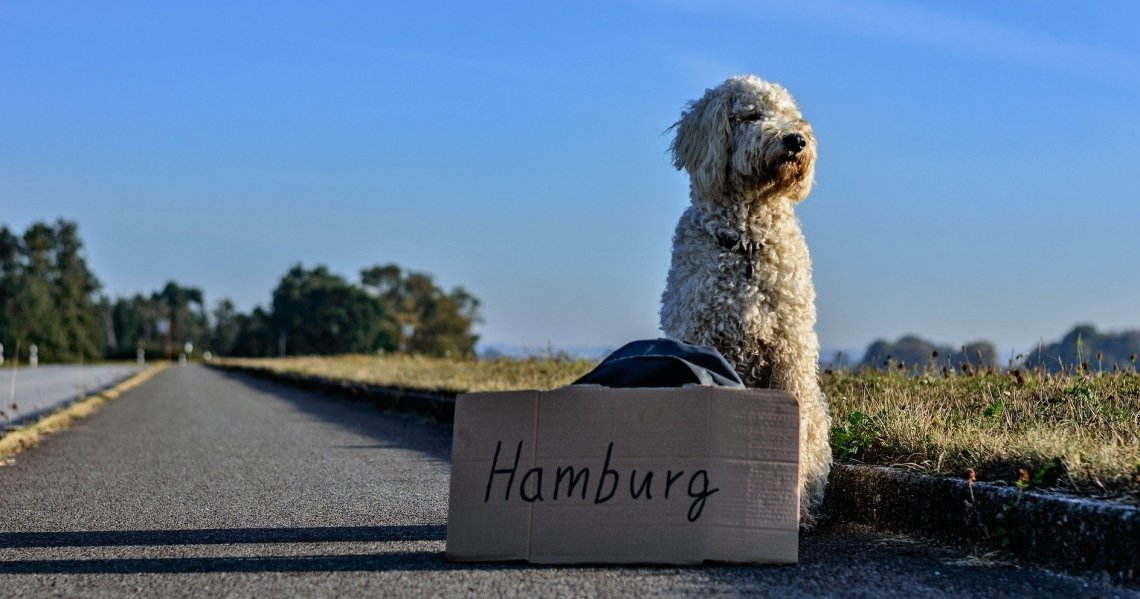 Dog on the street with Hamburg sign
