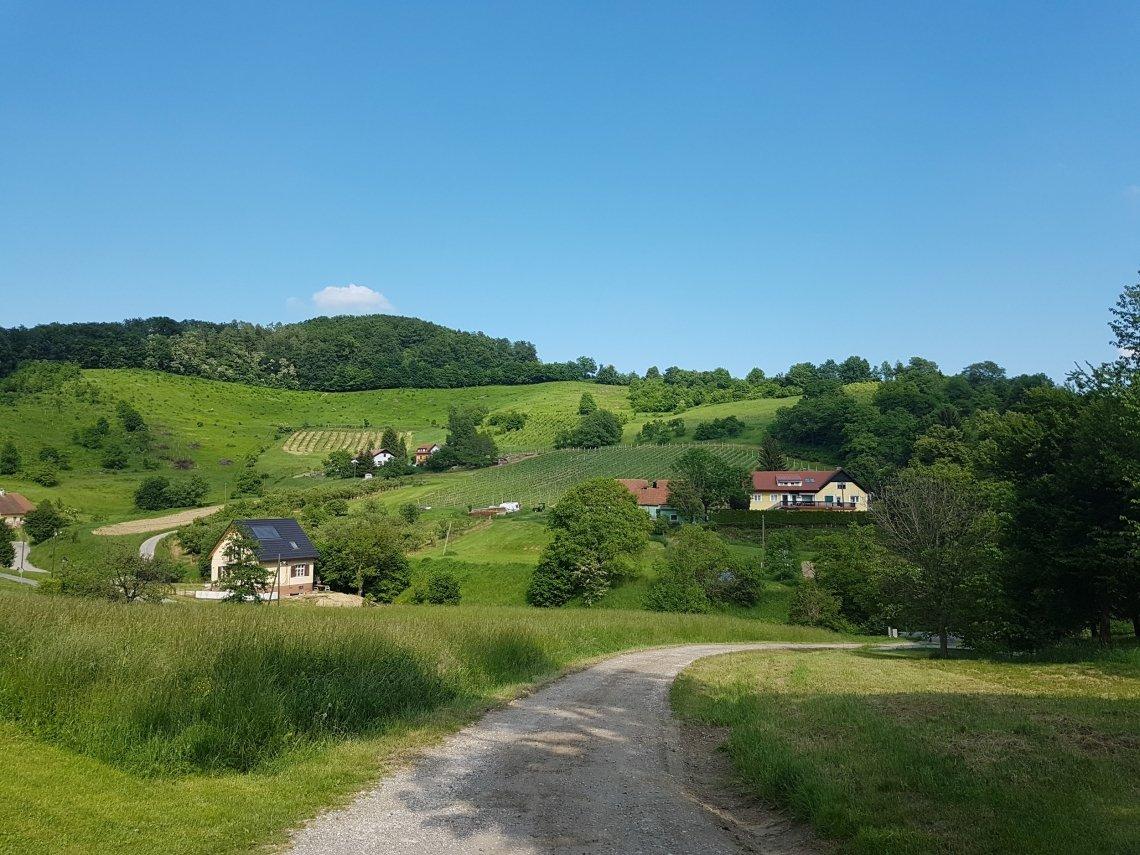 De wijngaarden bij Maribor
