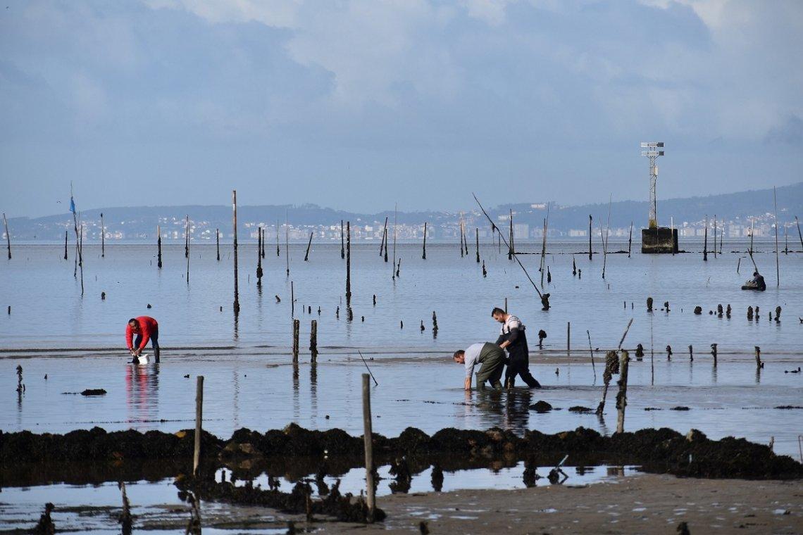 muschelzucht Galicien in der Bucht Ría de Arousa