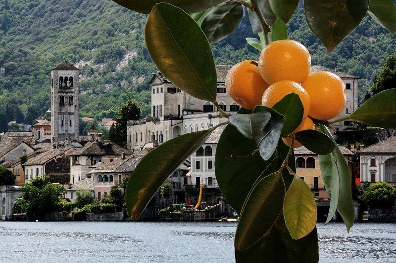 Orange tree at lake Garda