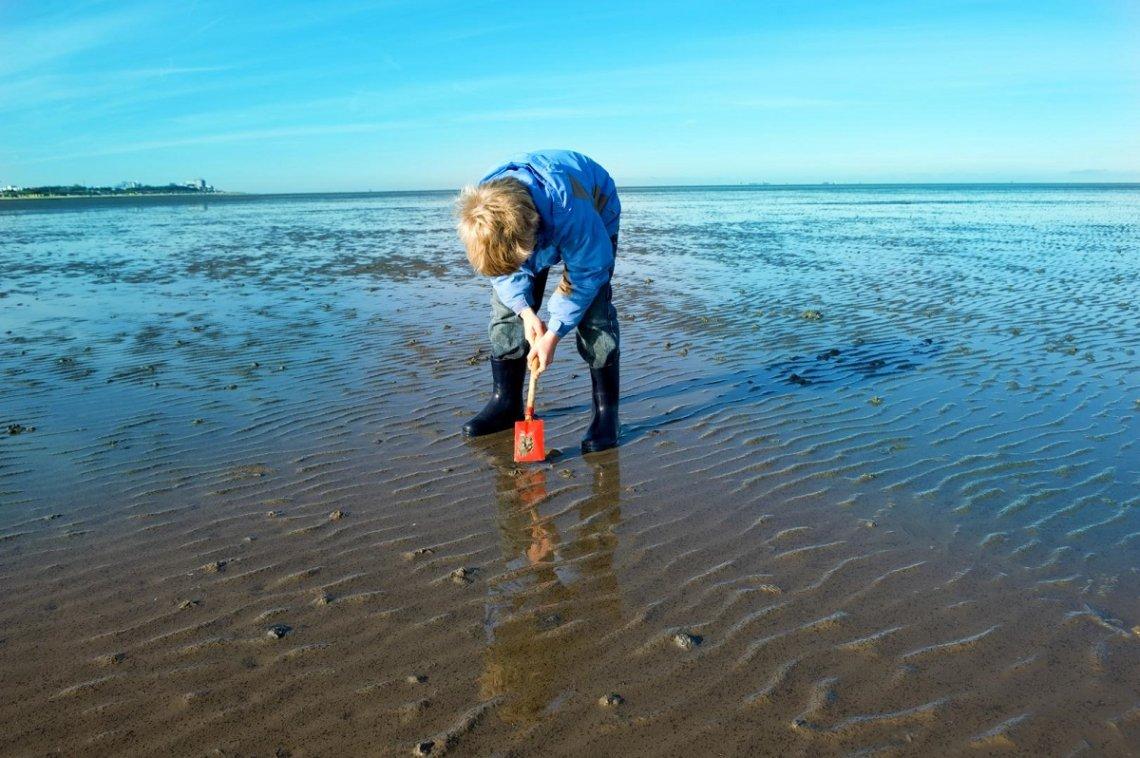 Kind buddelt im Watt an der Nordsee